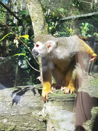 Singe dans le Zoo Deshaie